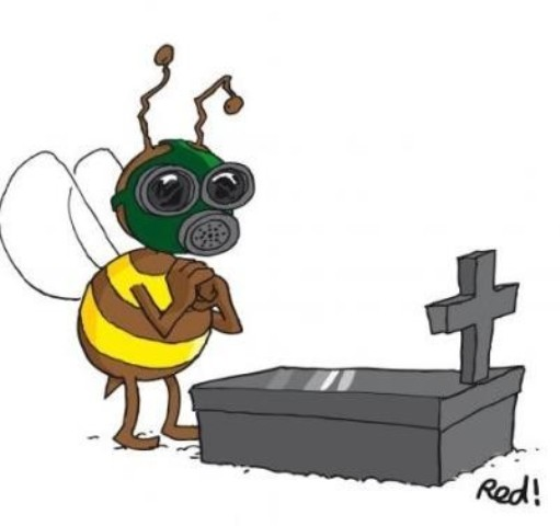 abeille mortalit